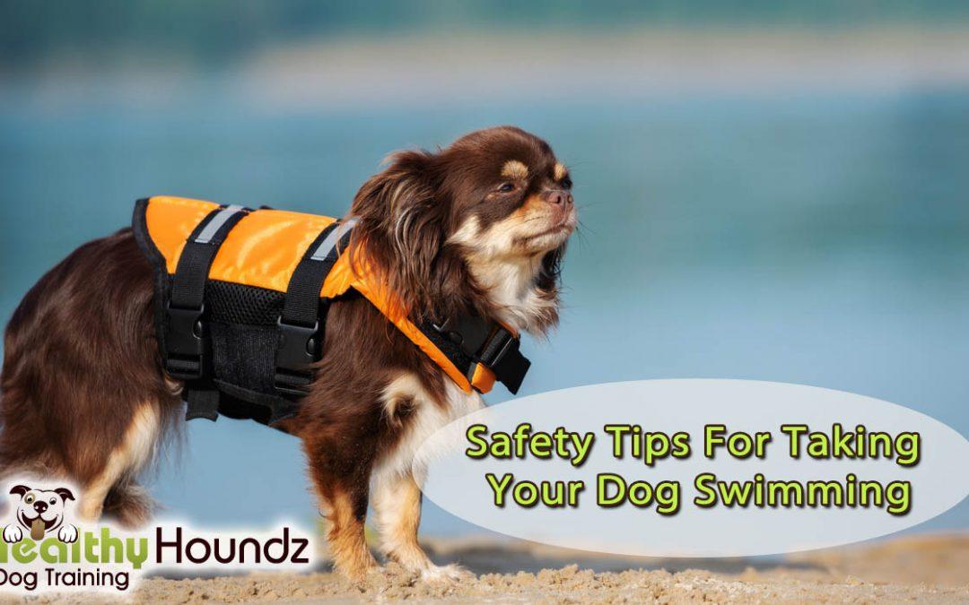 Take Your Dog Swimming