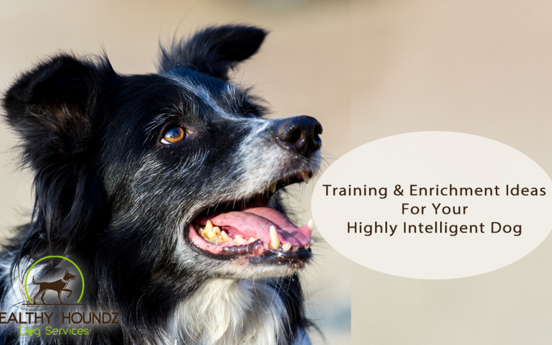 Intelligent Dog Training And Enrichment Games
