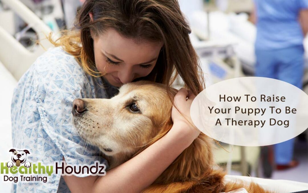 Raise Puppy To Be A Therapy Dog