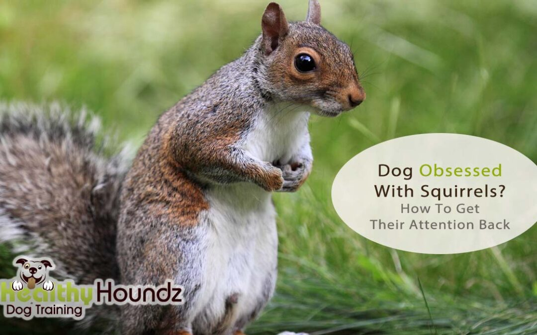 Is Your Dog Obsessed With Squirrels? How To Get Their Attention Back