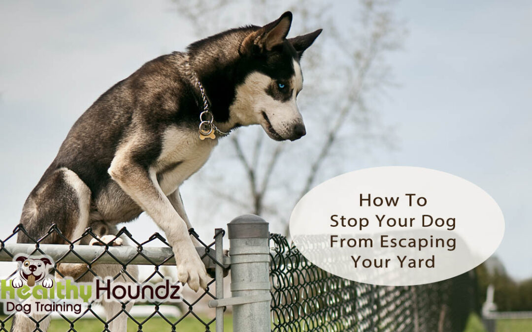 How To Stop Your Dog From Escaping Your Yard
