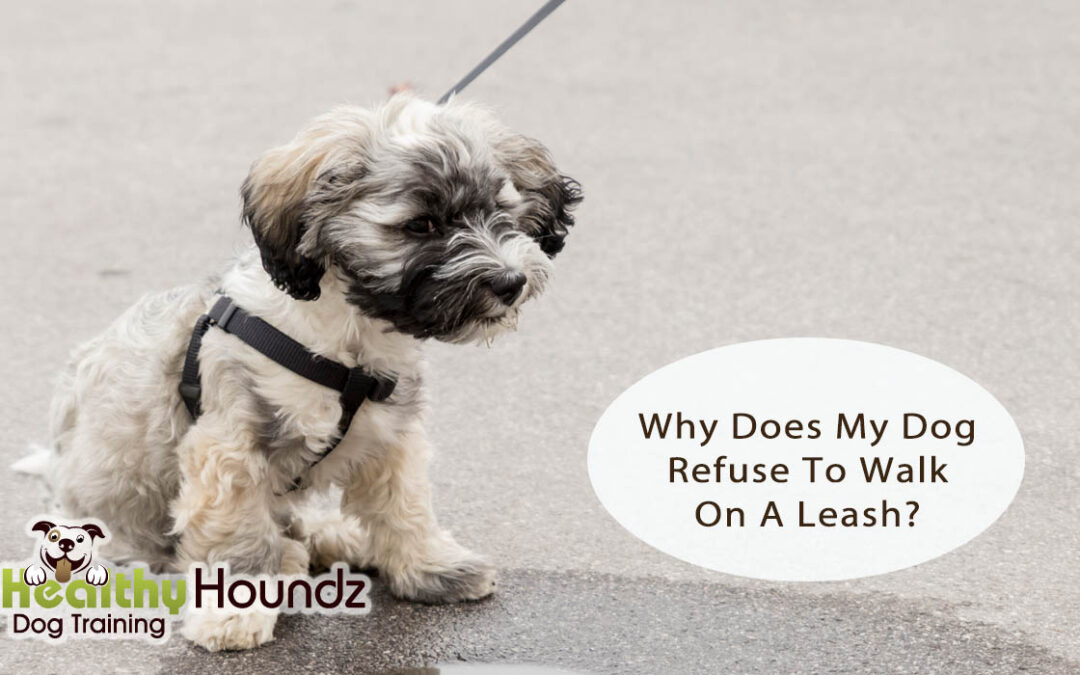 Why Does My Dog Refuse To Walk On A Leash?